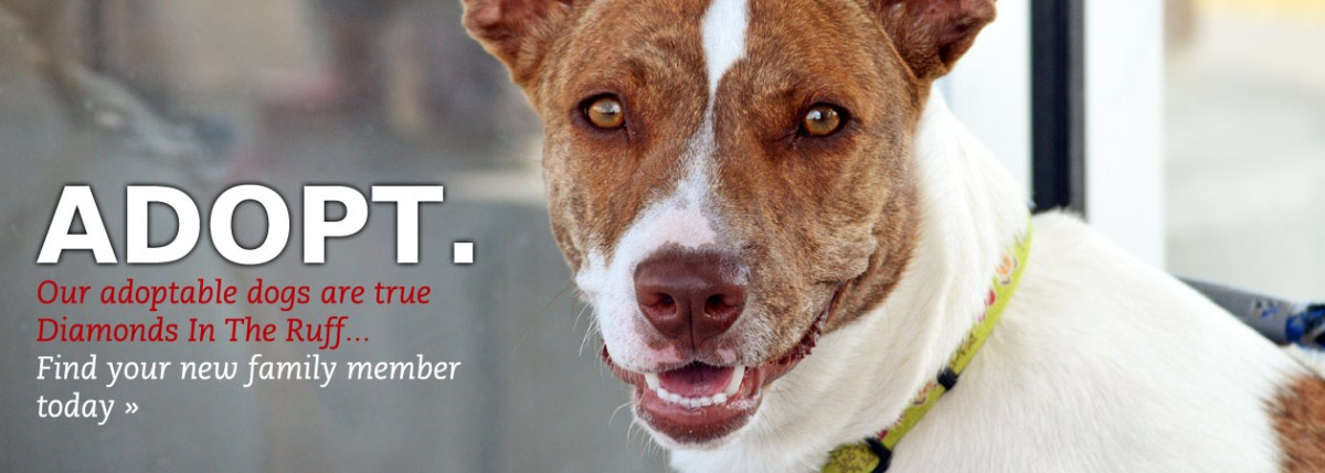 Our adoptable dogs are true Diamonds In The Ruff. Find your new family member today...