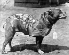 Sergeant Stubby WWI War Dog