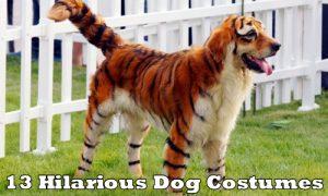 a-aaa-halloween-dogs