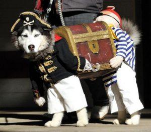 best-dog-halloween-costume-husky