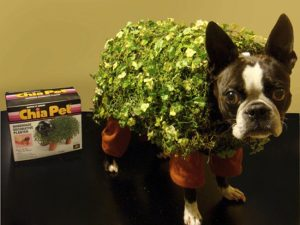 chia-pet-halloween-dog-costume