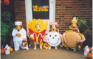 funny-halloween-dogs-pictures-9