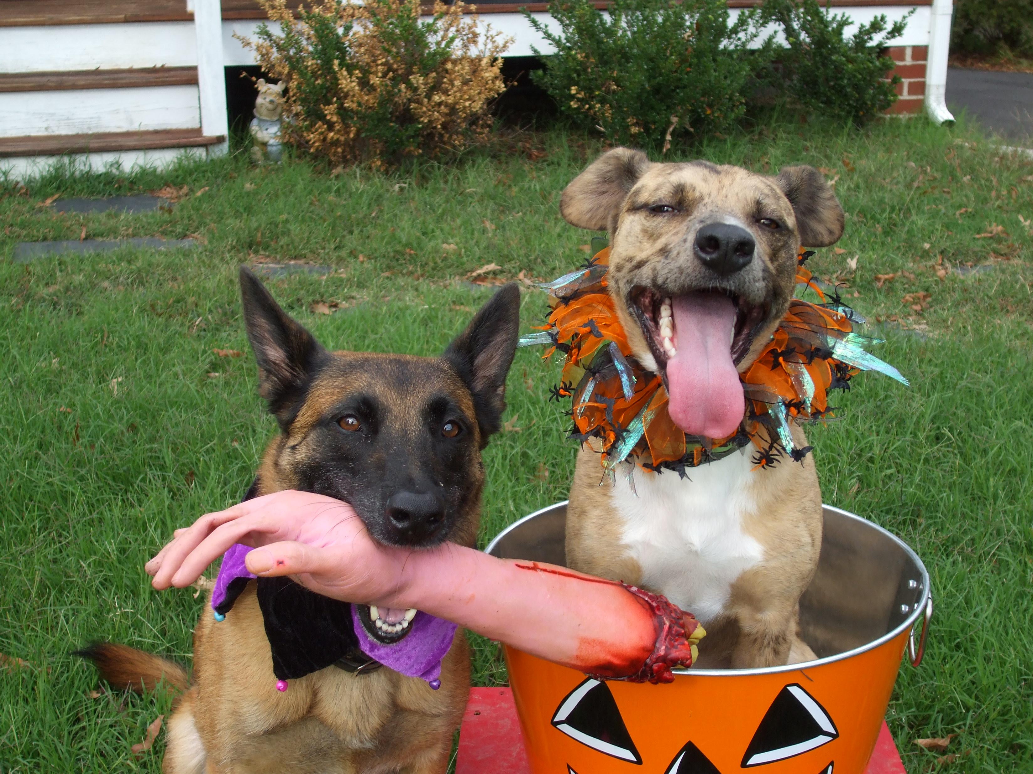 Halloween Happy dog pictures photo