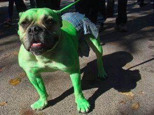 ss-091027-halloween-dogs-14-ss_full